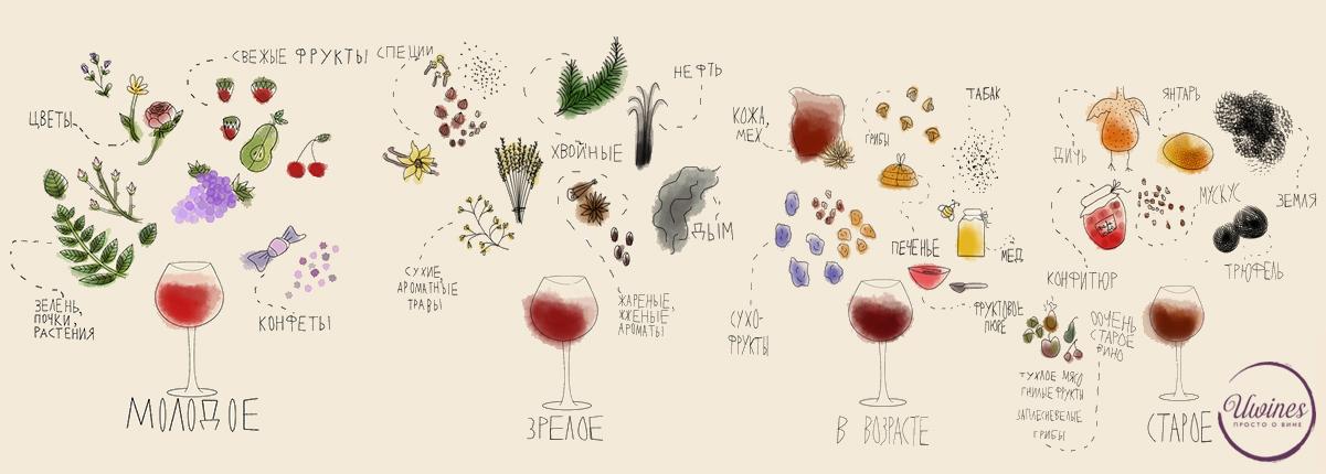 Почему я не понимаю, чем пахнет вино?