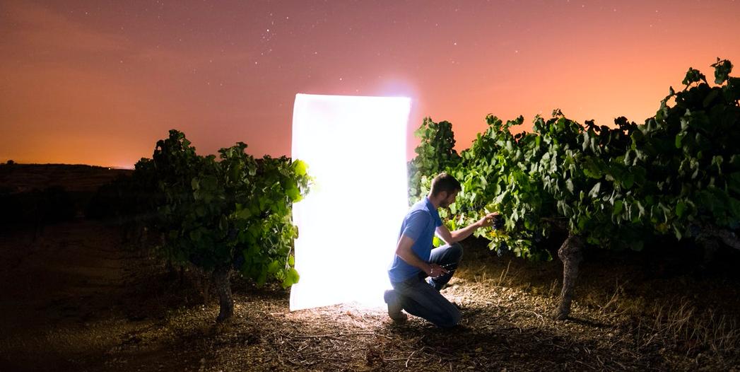 Сбор урожая на винодельне — это как вообще?