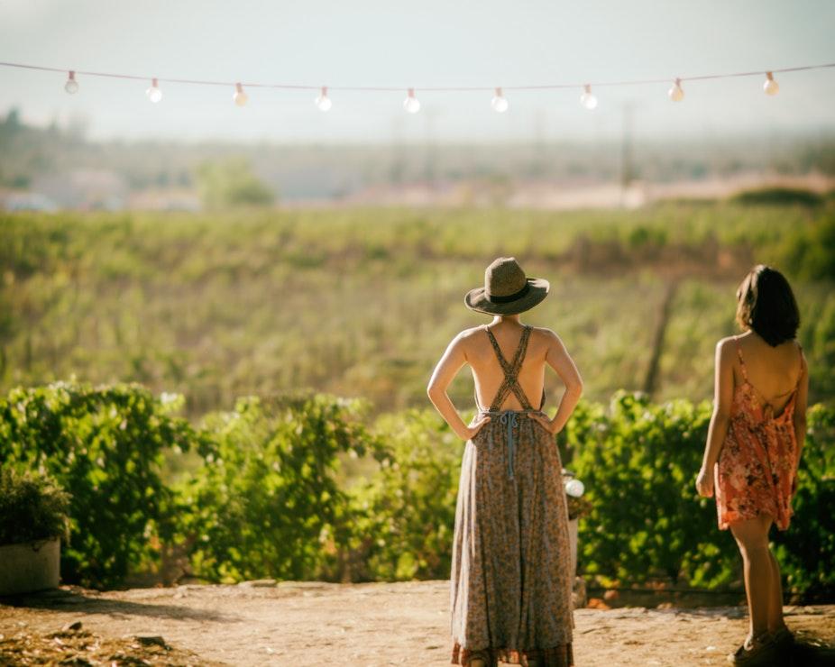 Личный опыт: как поработать на французской винодельне?